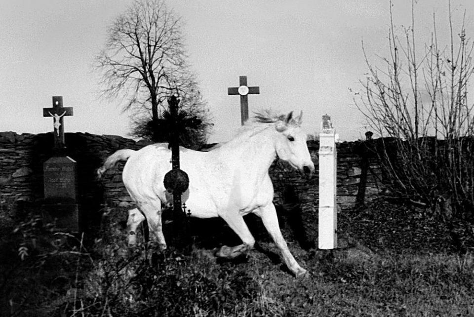 Cavallo bianco, cimitero